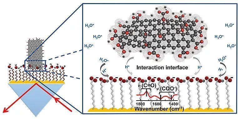 氧化石墨烯相互作用界面的质子转移